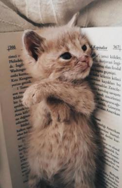Un petit chat mignon, ça fait toujours du bien